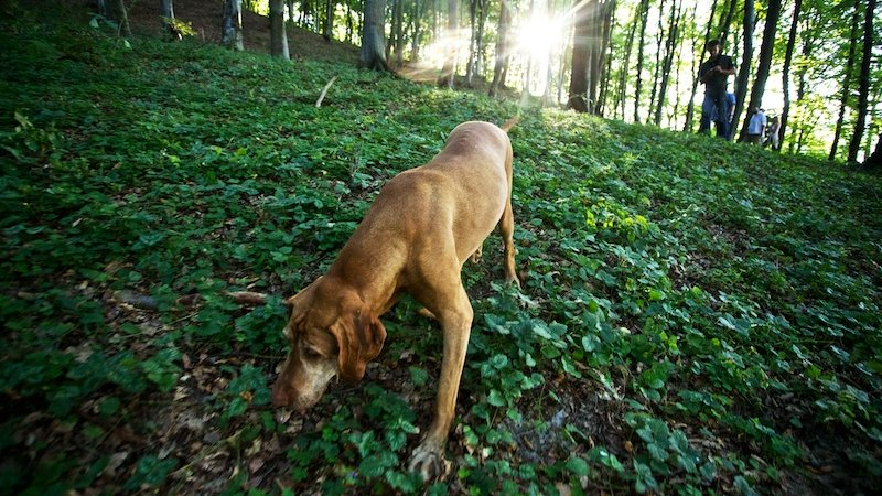 Truffle Hunting 01-min