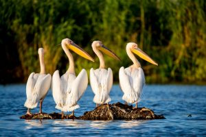 Danube Delta - Home to breathtaking nature