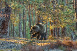 Bear Sanctuary, Zarnesti, Romania (2)
