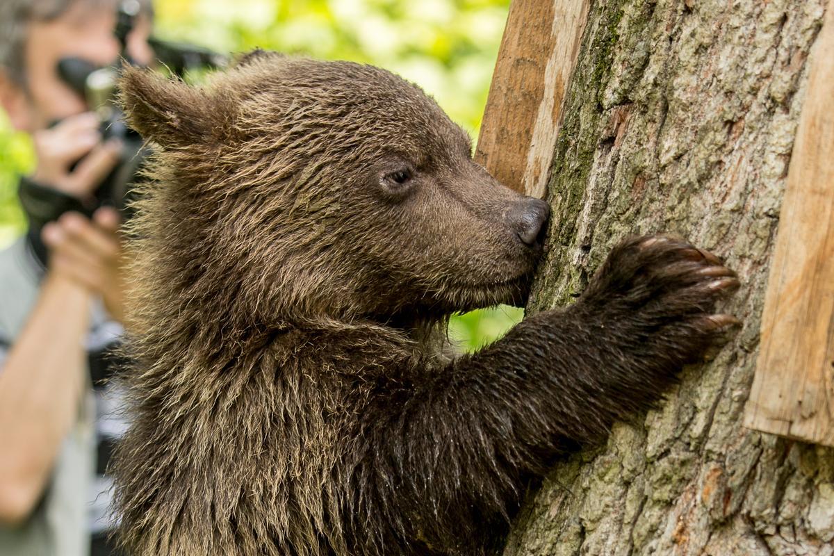 Bear Sanctuary, Zarnesti, Romania (3)