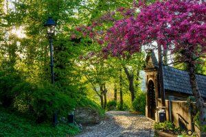 Sighisoara, Romania 1